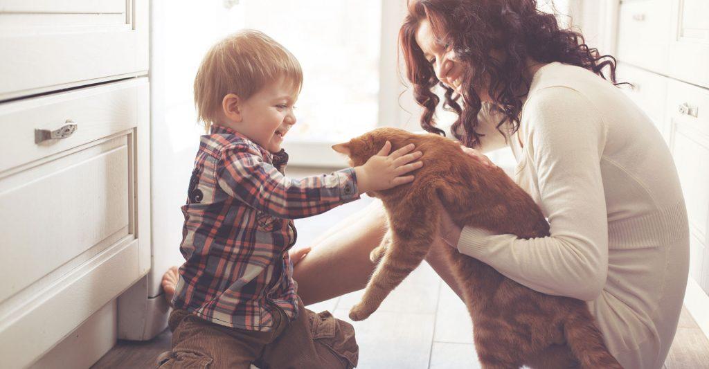 alergia animais de estimação