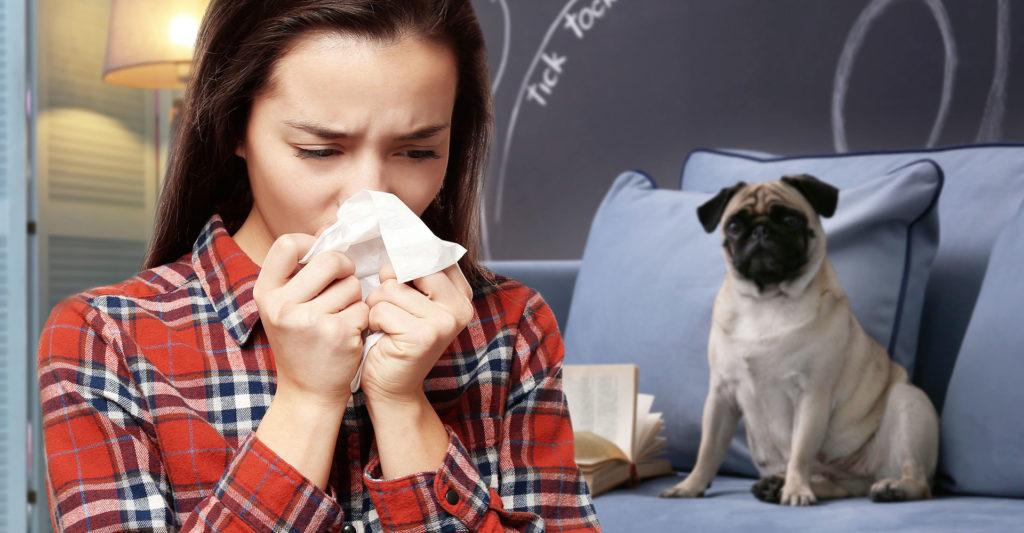 minimizar a contaminação por alergia aos animais