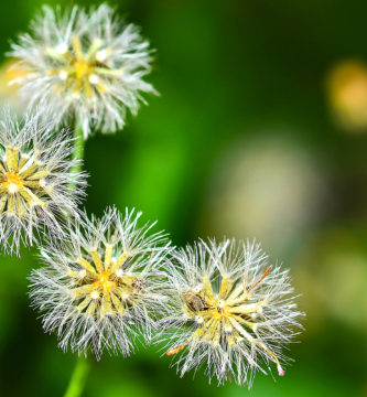 Diminuir os sintomas da alergia ao pólen