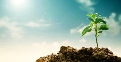 alterações climáticas e alergias