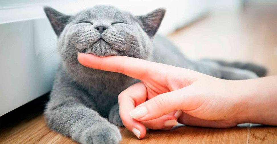 Alergia aos animais de companhia