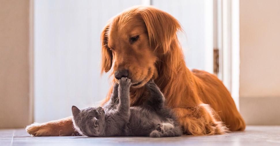 animais tambén sofrem de alergias