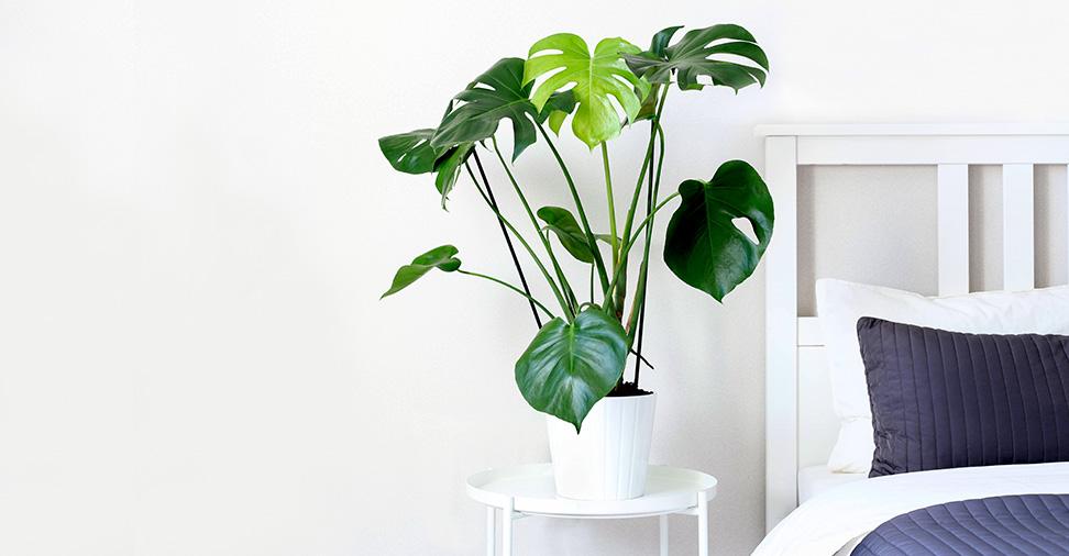 5 plantas de interior recomendáveis em casas con alergia