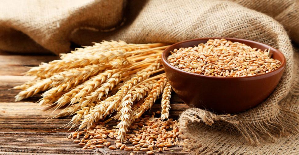 Alergia ao trigo: sintomas e tratamento